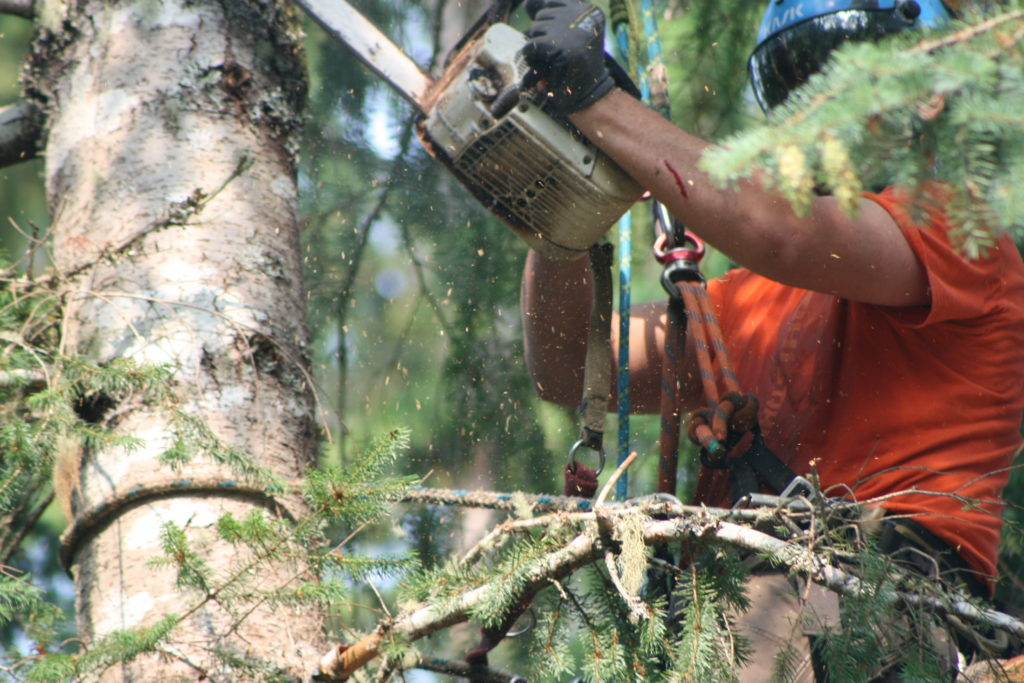 Tree Removal North Shore NZ