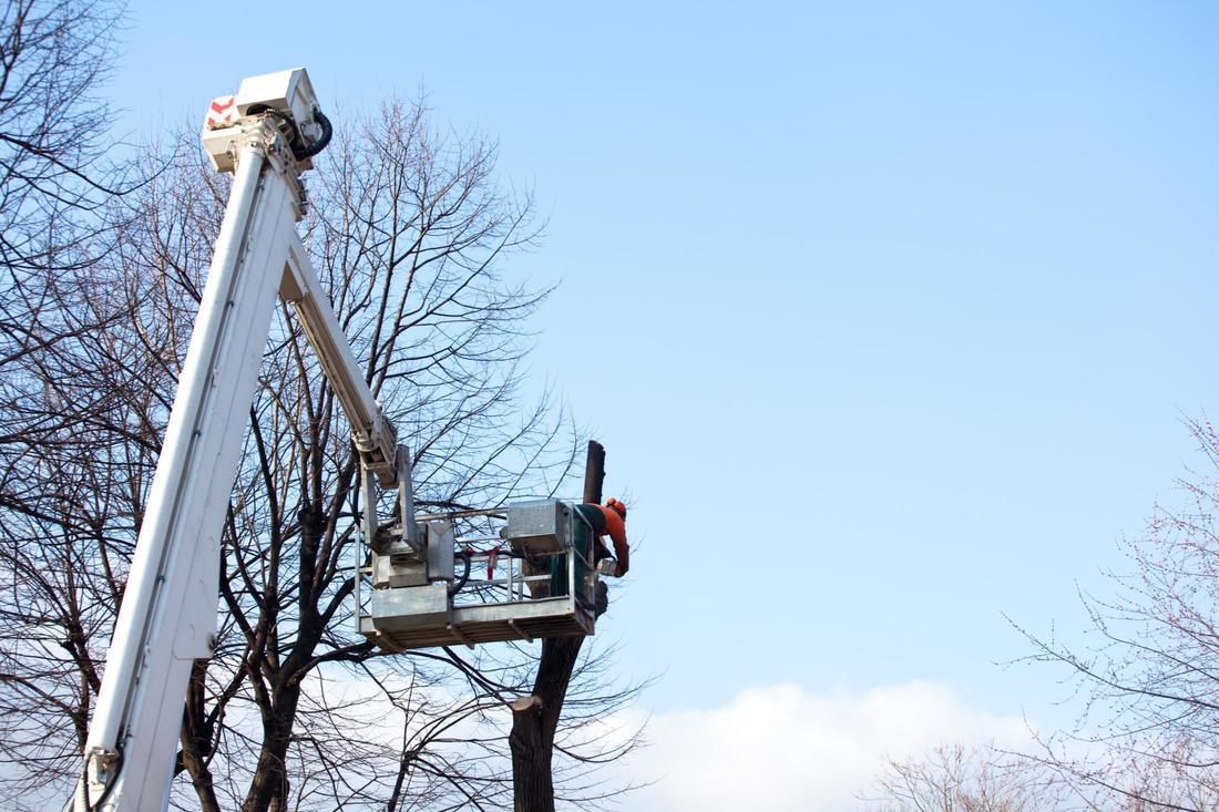 North shore Tree removal