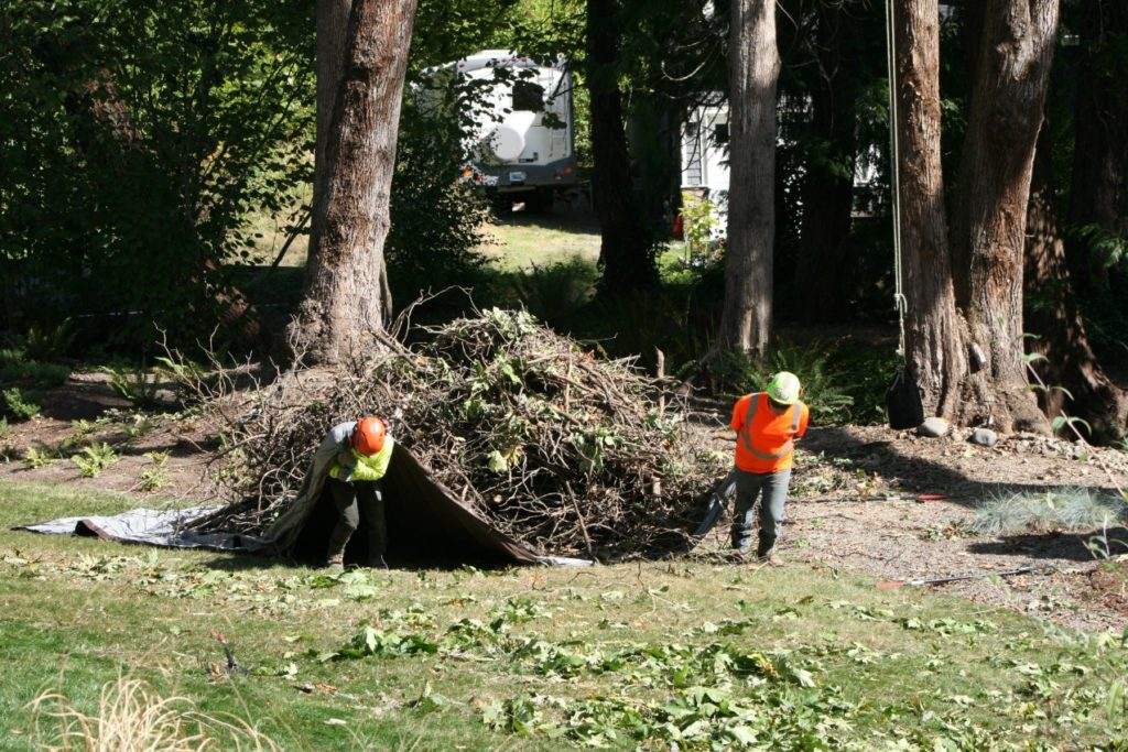 Tree cutting north shore
