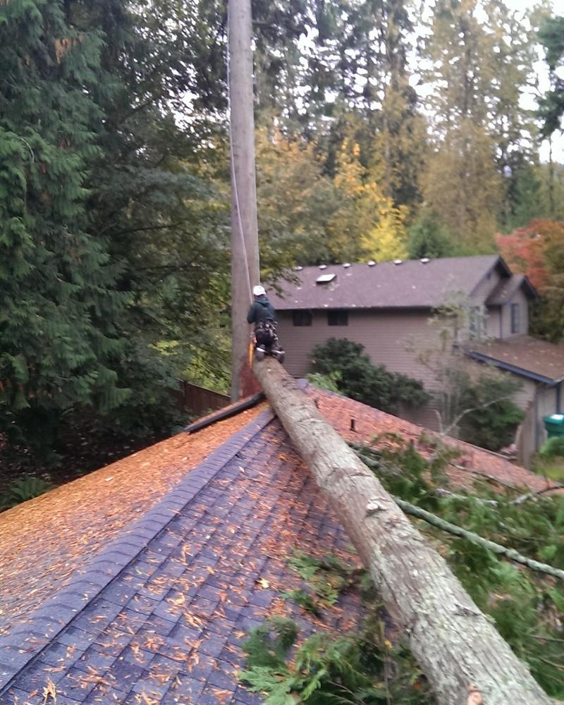 Emergency tree service north shore